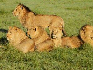 9 Days Wings Over Safari in Kenya