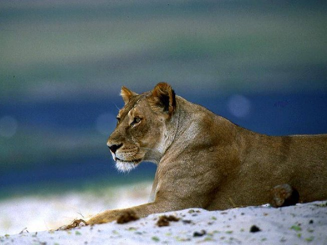 3 Days Chobe National Park Safari