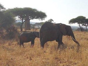 5 Days Exciting Camping Safari in Serengeti, Lake Manyara, Ngorongoro Crater, Tanzania