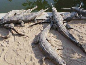 4 Day of Cultural Wildlife Tour in Sauraha, Narayani