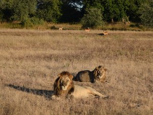 15 Days Adventurous Safari in Zambia from West to East