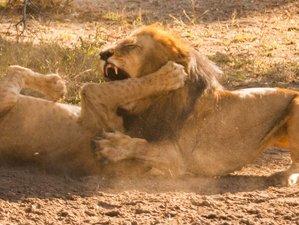 3 Days Explore the Southern Circuit of Safari in Tanzania to Mikumi and Udzungwa National Park