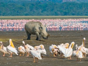 8 Days Breathtaking Safari in Kenya