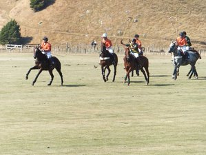 2 Days Unforgettable Kiwi Experience and Polo Holiday in Waikato, New Zealand
