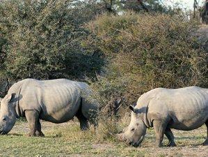 14 Days Extraordinary Wildlife Safari in Botswana