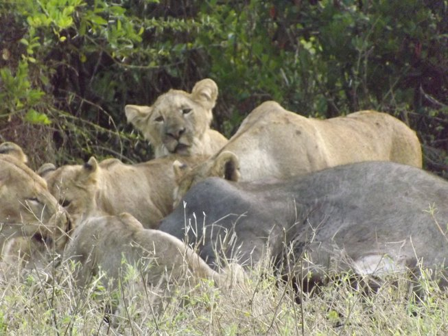 6 Days Affordable Safari Tour in Tanzania