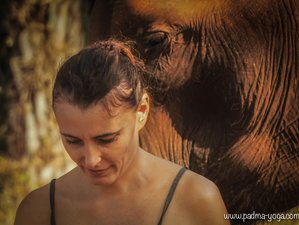 6 days in the Presence of Elephants Yoga Retreat in Thailand