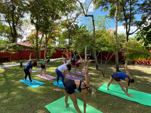 8 Day Wellness Experience with Yoga, Tai Chi, SUP, Cooking, and More in Bahia Brazil