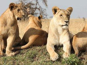 6-Daagse Safari in Oeganda