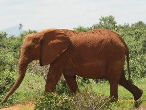 7 Day Pride Wildlife Safari in Kenya