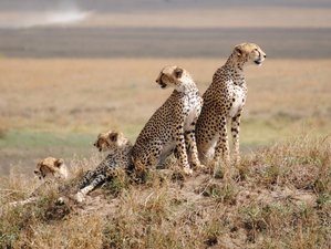 6 Days Camping Safari in Tanzania