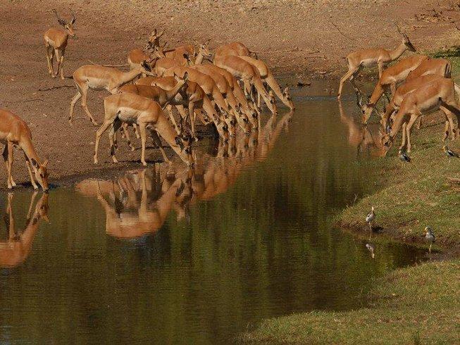 3 Days Budget Safari in Botswana