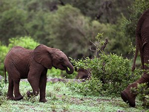 4 Days Exciting Safari in Kruger National Park, South Africa