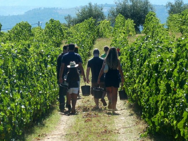 6 Days Wine Tours in Portugal