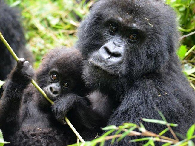 4 Days Gorilla Trekking Safari in Rwanda