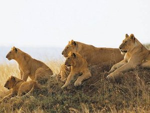 5 Days Big Five Tanzania Safari