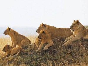 5 Days Memorable Tanzania Safari