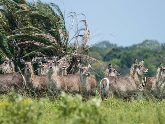 2 Days iSimangaliso Wetland Park Safari South Africa