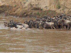 4 Days Best of Wildlife Safari in Kenya