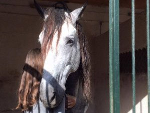 3 Day Heal and Balance, Horse as a Spiritual animal, Riding & Yoga Holiday in Malaga, Costa del Sol