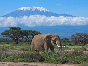 7 Days Maasai Mara to Amboseli Mid Range Safari Tour in Kenya