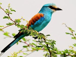 14 Days Birding Safari in Ethiopia