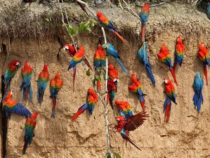 5 Day Lake Sandoval and Collpa Chuncho Wildlife Tour in Peru