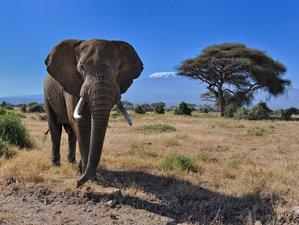 3 Days Amboseli National Park Safari in Kenya