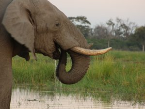 7 Day Fascinating Elephant Trail Safari in Botswana