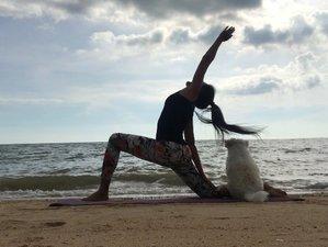 35-Stunden Selbstbestimmte Yin Yogalehrer Ausbildung mit Lek Yoga