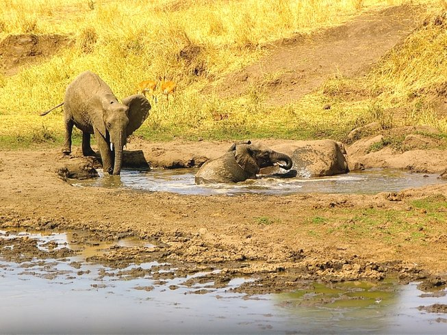 5 Days Beauty and the Beast Safari in Tanzania