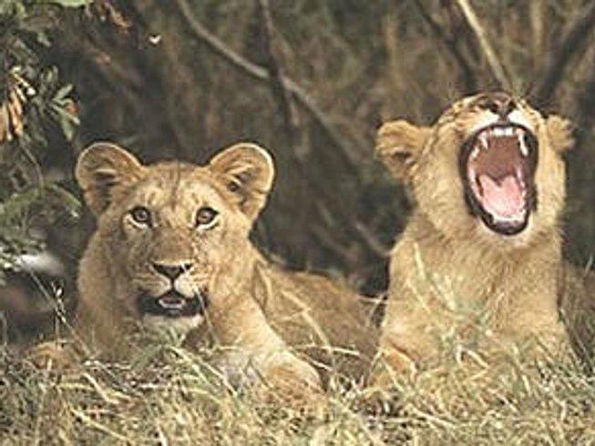 7 Days Kenya Wildlife Safaris