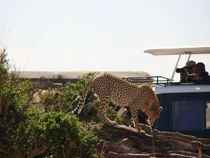4-Daagse Wildlife Lodge Safari Tour in Kenia
