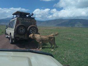 3 Days Wildlife Safari in Tanzania
