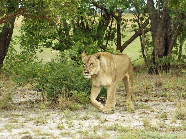 18 Days Kokomo Safari in Zambia