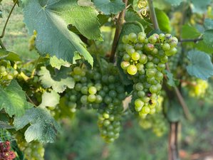 8 Day of Culinary Adventure Between Bunch of Grapes and Lake Tour in Franciacorta