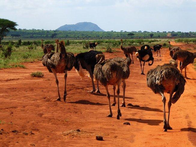 3 Days Treasures of the Sanctuaries Safari in Kenya