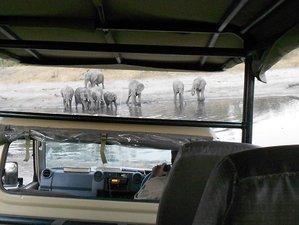 20 Days Into The Wild Safari in Botswana, Namibia, and Zimbabwe
