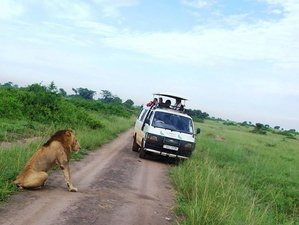 12 Days Uganda Safari Tour