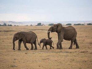 4 Days Masai Mara and Lake Nakuru Safari Tour in Kenya