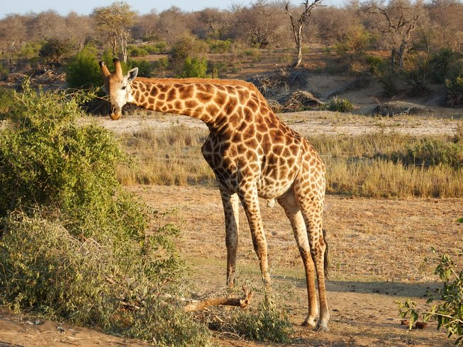 4 Days Luxurious Comfort Safari in Kruger National Park, South Africa