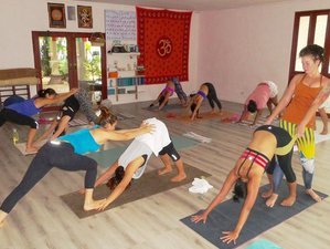 21 Days Intensive Ashtanga Yoga Retreat in Thailand