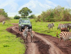 8 Days Enjoy a Great Migration Safari Tour and See Africa's Famous Animals in Kenya and Tanzania