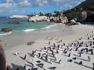 13 Days Coastal Experience Safari South Africa