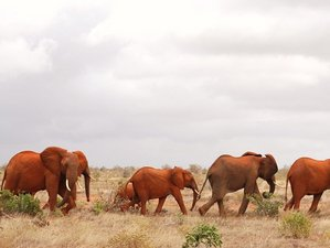 5 Days Best of Amboseli and Tsavo Safari Tour in Kenya