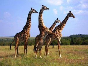 8 Days Best Wildlife Safari in Kenya
