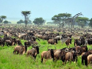 6 Days Magnificent Migration Safari in Kenya