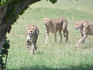 3 Days All Inclusive Masai Mara Budget Safari in Kenya