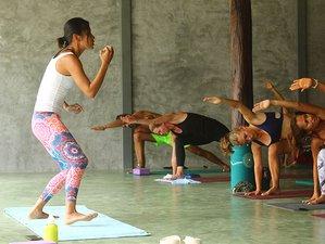 30 Days 200-Hour Hatha Based Multi-Style Yoga Teacher Training in Koh Phangan, Thailand