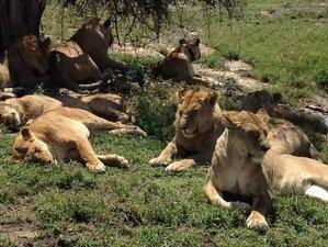 5 Days Wildlife Trail Safari in Tanzania